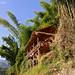 06-11-02 Laos-Camboya Luang Prabang (329) O01