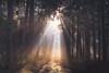 3/365 (der_peste) Tags: crepuscularrays forest forestpath woods woodland trees raysoflight raysofgod sunrays light shadow mist fog mood moody