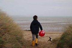 A boy and his dog (sif.ellis1) Tags: abersoch bleak tail spaniel springer seaside grass grads dunes sand red ball beach dog boy