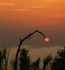 Sun bow (Robyn Hooz) Tags: sun sole ramo nebbia colliberici fog haze orange arancio foschia vicenza