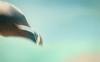Emotions in motion fading… (Maurizio Scotsman De Vita) Tags: natura astrazioni nature abstract animali alcatorda razorbill uccelli birds gazzamarina colourful abstractions animals scotland closeup portraitanimal animalportrait animalportraiture astratto colorato impressionistic impressionistico livecolours ritrattodianimale scozia wildlife