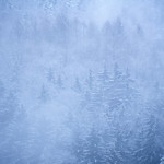 Nebelwälder thumbnail