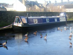 Well there WAS water yesterday = Frozen Canal = SKIPTON, Yorkshire (rossendale2016) Tags: heating fired coal scouring eating fish feeding beaks green drake duck drakes typical original painted canvas protective canopy rope accomodation living residence narrow houseboat house blue slip slide tourists destination popular attraction tourist holiday scene colourful picturesque photograph from bridge services secured moored tied banking bank footpath path canalside waterway top thick hoare frost hard fridge refrigerator freezer life freezing solid icy winter cold sliding slipping ducks narrowboat barge water yorkshire skipton frozen ice canal