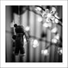 Le petit ours qui n'avait qu'une oreille... (Panafloma) Tags: 2017 bandw bw evènements famille nadine nadinebauduin natureetpaysages noël objetselémentsettextures personnes techniquephoto animaux blackandwhite décoration décorationnoël lumière noiretblanc noiretblancfrance ours france fr