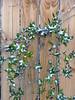Clinging Vine (jHc__johart) Tags: vine fence snow oklahoma
