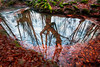 REFLEJOS 2 (juan luis olaeta) Tags: art ura agua water brilliance reflejos otzarreta canon sigma1020 photoshop lightroom basoa arbol hayedo pagoa