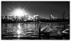 Swans in Victoria Park (Gordon McCallum) Tags: blackandwhite swans victoriapark victoriaparkglasgow lensflare boxingday sony sonya6000 sigma16mm14contemporarylens winter