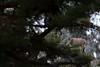 FLD_9942m (MILESI FEDERICO) Tags: milesi milesifederico montagna italia italy iamnikon inmontagna wild wildlife mammifero alpi alpicozie altavallesusa altavaldisusa animale animal stambecco ibex nikon nikond7100 nital natura nature nat piemonte piedmont visitpiedmont valsusa valdisusa valliolimpiche valledisusa sigma150500 sigma salbertrand d7100 dettagli details inverno winter 2017 dicembre corna nevicata