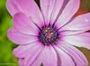 171227 170606 (friiskiwi) Tags: macroflowers