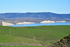 Drake's Bay with Dairy Cows (Ian E. Abbott) Tags: drakesbay dairycows dairycattle dairyfarming pasture marincounty agriculture