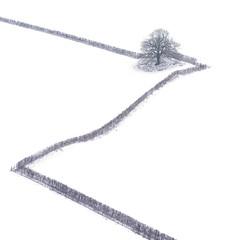 Meander (Draws_With_Light) Tags: vegetation aerialphotography hedge landscape winter season millington abstract djiinspire1pro hills scene drone tree eastridingofyorkshire fields mountainshills camera places olympusmzuiko45mmf18