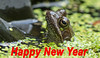HAPPY NEW YEAR (The Rustic Frog) Tags: happy new year warwickshire frog uk england central midlands great britain wild animal canon eos digital camera 7d mark mark2 2 lens 100mm macro amphibian garden common pond duck weed greetings west 2018 helen scarsbrook water adult green kermit