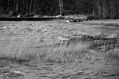 IMG_0058 (www.ilkkajukarainen.fi) Tags: espoo visit sea meri tarvel traveling december joulukuu blackandwhite mustavakoinen haukilahti suomi suomi100 eu europa scandinavia finland finlande nature luonto landscape maisema