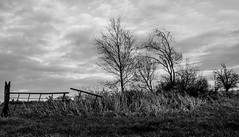 Day one (Fearghàl Nessbank) Tags: leica x2 blackwhite landscape trees gate