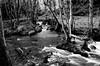 Harden Beck (Richie Rue) Tags: beck stream brook burn water woods woodland trees winter landscape monochrome blackandwhite film analogue analog ilford panf nikon fm yorkshire bradford england uk northern bare rocks