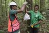 Regnskog i Guyana