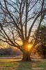 Grandfather Tree (DaxxKD) Tags: tree landscape sunset sunflare sun bark texture hermitage tn