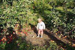 Apple Picking at Geig's Orchard (meganleebuchanan) Tags: people family kids ohio fall apple picking apples travel tourism destination lifestyle adventure explore