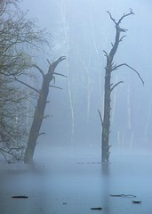 Delamere  Forest , Cheshire , UK (mlloyd4075 ARPS) Tags: dead lake delamere forest cheshire uk trees mere mist ice frost fog