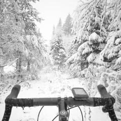Snowy trail (VanhalaK) Tags: finland hikiä cycling cyclocross cyclo bike bicycle garmin spurcycle jamis jamisrenegade adventurecycling travel mobile oneplus oneplustwo trail mtb outdoors outside woods for forest snow snowy scene view winter bw blackandwhite blackwhite blacknwhite monochrome mono monoart 45th 45nrth gravdal spikes