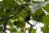 20171225-0I7A5068 (siddharthx) Tags: singapore sg redearedslider sungeibulohwetlandreserve canon7dmkii ef100400mmf4556lisiiusm nature wildlife migratorybirds whitebreastedwaterhen milkystork whimbrel commongreenshank commonredshank lessersandplover curlewsandpiper chineseegret greatercrestedtern orientalpiedhornbill collaredkingfisher orientaldollarbird greyheron vulnerable mangroves wetlands marsh nparksbuzz tree water mangrove bird landscape paintedstork purpleheron sky animal greategret snowyegret habitat nightheron forest wood monitor watermonitor lizard saltwatercrocodile grass malayanwatermonitor asianwatermonitor commonwatermonitor twobandedmonitor ricelizard ringlizard plainlizard nomarklizard periophthalmusargentilineatus rock river foliage gerridae waterstrider pondskaters waterskippers jesusbugs birdsinflight birdsinthewild wetland egret crab purplesunbird sunbird spiderhunters nectariniidae