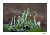 Pentacon 29 mm f/ 2.8 MC Auto (nat123601) Tags: lichen