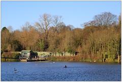 Hamsptead Heath Pond (Jaafar Mestari) Tags: hampstead heath hampsteadheath london canon eos 6d canoneos6d ef 85mm ef85mm park green