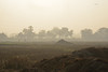 Fogland (sanat_das) Tags: kolkata madurdaha field morning menwalking mist fogland landscape d800 28300mm