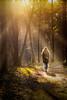 Sunny woods (.Semm) Tags: girl woman sun sunny wood woods forests tree trees path landscape sunray dutch netherlands holland europe yellow warm orange