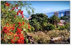 Ein steiler Abgang (Don111 Spangemacher) Tags: blüte blüten städte bunt meer teneriffa pflanzen park puertodelacruz palmen kulturlandschaft wege reisen urlaub