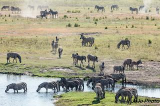 Botswana_2017-69