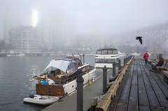 Vancouver In The Fog (Clayton Perry Photoworks) Tags: vancouver bc canada fall autumn explorebc explorecanada granvilleisland fog boat bird