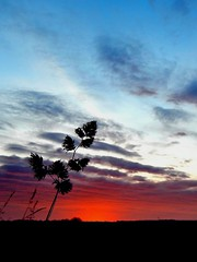 Extraordinary Sunrise (Caledoniafan (Astrid)) Tags: nature natur landscape landschaft himmel sky clouds wolken sunrise sonnenaufgang morgen morning gras grass weed silhouette caledoniafan nikon nikoncoolpixl820 nikoncoolpix explore