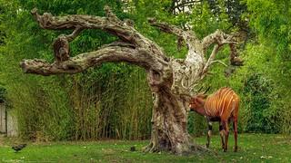 Splendid Tree - 4263