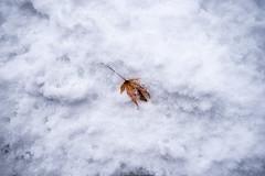 DSC_9812_ (yaa-) Tags: ishikawa kanazawa kenrokuen winter snow d750 nikon 2818 兼六園 金沢