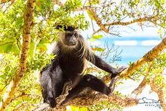 Hanging on the beach 🙈🙉🙊😎☀️ (The Sands Kenya) Tags: beach island kenya africa indian ocean diani