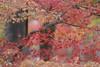 * K A Y E D E * (Jim Mayes) Tags: canon eos digital 400mm ef ef400mmf56lusm 大阪市立長居植物園