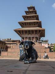 Nyatapola Tempel - Bhaktapur (Hobbyallradler) Tags: nepal himalaya tempel bhaktapur kathmandu