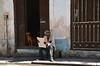 Cuba- La Habana (venturidonatella) Tags: cuba lahabana lavana avana street streetscene streetlife portrait ritratto persone people cane dog occhiali nikon nikond500 d500 emozioni lettura caribbean caraibi