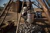 Food crisis in South Sudan (Albert Gonzalez Farran) Tags: food crisis famine farmers farming fish fishermen fishery fishing foodsecurity humanitariancrisis hunger river aweil northernbahrelghazal southsudan