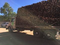 "GWD Forestry eucalyptus timber sales Brazil <a style=""margin-left:10px; font-size:0.8em;"" href=""http://www.flickr.com/photos/47172958@N02/38556148615/"" target=""_blank"">@flickr</a>"
