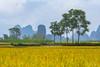 _Y2U0536.0917.Ngọc Côn.Trùng Khánh.Cao Bằng (hoanglongphoto) Tags: asia asian vietnam northvietnam northeastvietnam landscape scenery vietnamlandscape vietnamscenery vietnamscene fields ricefields harvest tree trees sky mountain sierra flanksmountain hdr canon canoneos1dx canonef135mmf2lusm đôngbắc caobằng trùngkhánh ngọccôn pòpeo phongcảnh phongcảnhcaobằng cánhđồng cánhđồnglúa lúachín mùagặt bầutrời cây núi dãynúi sườnnúi