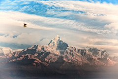 Machhapuchhare (Fishtail Mountain) (tclemitson) Tags: annapurnas himalayas nepal pokhara sarangkot sunrise westerndevelopmentregion