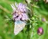 Dotty (Lexie's Mum) Tags: walk walking nature countryside warwickshire butterfly