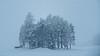 winter (Alta Alteo) Tags: winter schneetriben austria tirol wäldchen obsteig rundweg miemig