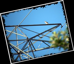 2010-04-06-P1100501pic (robertlesterphotography) Tags: april2010 aroundthehouse hawk wildlife
