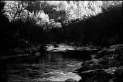 Chemins noirs (Rachelnazou) Tags: caffenol blackwhite