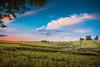 Wind painted (Nebelski) Tags: agriculture nature ruralscene farm field sky summer landscape outdoors meadow land sunset cloudsky landscaped nonurbanscene scenics crop wheat blue season