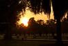 0F1A2928 (Liaqat Ali Vance) Tags: nature sunset trees google lawrence garden liaqat ali vance photography lahore punjab pakistan