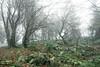 Mystik Wald (Karsten Höhne) Tags: bäume felsen forst gipfel herbst hornbadmeinberg lippe lippischevelmerstot naturschutzgebiet nebel regen silberbachtal steine teuteburgerwald tour wald wanderweg
